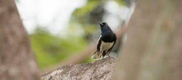 Mały ptak na gałąź Fotografia Royalty Free