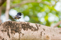 Mały ptak na gałąź Zdjęcia Royalty Free