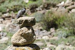 Mały ptak na skałach Zdjęcia Royalty Free