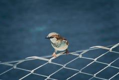 Mały ptak uczepia się przejażdżkę na żaglówce fotografia stock