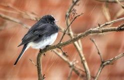 Mały ptak w opadzie śniegu Obrazy Stock