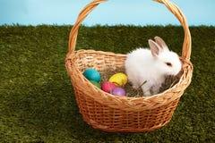 Mały puszysty biały Wielkanocnego królika obsiadanie w koszykowych kolorów jajkach Obraz Stock