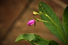 Mały Różowy Dziki kwiat Fotografia Royalty Free