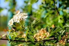 Mały rośliien i kwiatów dorośnięcie na gałąź Zdjęcia Royalty Free