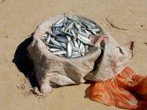 Mały rybi połów w koszu dalej na piaskowatej plaży Zdjęcia Royalty Free