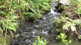 Mały rzeczny spływanie przez skał Ireland zdjęcie wideo