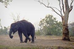 Mały słoń brać w Mudumalai parku narodowym Zdjęcia Stock