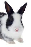 Mały Słodki królik Obrazy Royalty Free