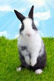 Mały Słodki królik Zdjęcie Royalty Free