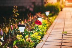 Mały Słoneczny ogródu światło, lampion W kwiatu łóżku ogród projektu ogrody Hamilton nowej Zelandii Obrazy Stock