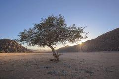 Mały samotny drzewo przy wschód słońca obrazy stock