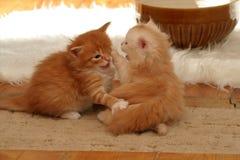 mały się kotem Zdjęcia Royalty Free