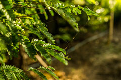 Mały sieć pająk na zielonych liściach Obrazy Stock