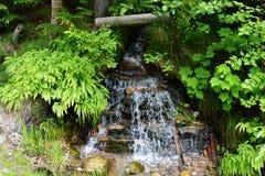 Mały Spokojny strumień w bujny zieleni lesie zdjęcie stock