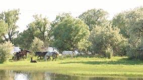Mały stado koni i źrebiąt pasać zbiory