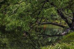 Mały staw i luźny drzewo Zdjęcie Royalty Free