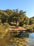 Mały staw przy stopą wielki drzewo Zdjęcie Royalty Free