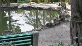 Mały staw w starym parku zbiory wideo
