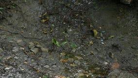 Mały strumień deszczówka płynie przez otoczaków i ziemi zbiory wideo