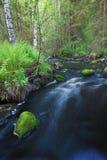 Mały strumień w lesie Zdjęcia Stock