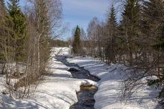 Mały strumień w lesie dokąd odwilż zaczynał Obraz Stock