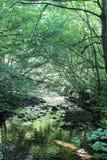 Mały strumienia spływanie przez zielonej obfitolistnej halizny Zdjęcia Royalty Free