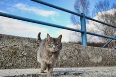 Mały szary brown kot na chodniczku na drodze, osamotniona śliczna mała figlarka bawić się w ulicie Fotografia Royalty Free