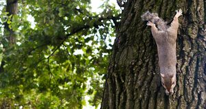 Mały wiewiórczy bawić się w parku obrazy royalty free