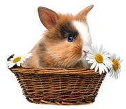 Mały wiosna królik Obraz Stock