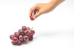 mały wskazany winogrono od wiązki czerwoni winogrona odizolowywający dalej Zdjęcie Royalty Free