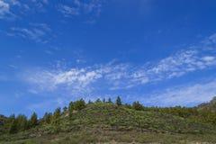 Mały wzgórze w południe Gran Canaria, wyspy kanaryjska Drzewa, zdjęcia royalty free