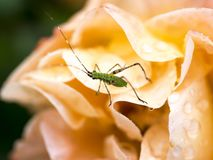 Mały Załzawiony I insekt Wzrastaliśmy Po deszczu fotografia royalty free