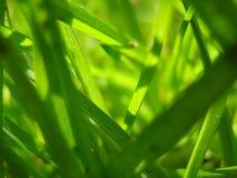 Mały Zielony świat Zdjęcie Royalty Free