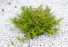 mały zielony krzew Zdjęcia Royalty Free