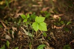 Mały zielony liść Fotografia Stock