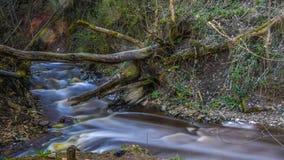 Mały zimny strumień w Karelia republice Fotografia Stock