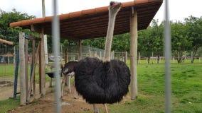 Mały zoo Brazylia fotografia royalty free