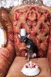 Mały zwierzęcia domowego przyjęcia urodzinowego świętowanie Fotografia Stock