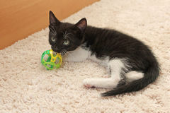 Małych czarny i biały figlarka kąsków zabawkarska piłka Zdjęcia Royalty Free