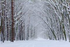Ma?ana de niebla en la madera del invierno Fotos de archivo libres de regalías