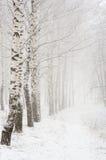 Ma?ana en la madera del invierno Fotografía de archivo libre de regalías