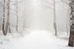 Ma?ana en la madera del invierno Foto de archivo libre de regalías