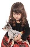 mała chihuahua dziewczyna Fotografia Stock
