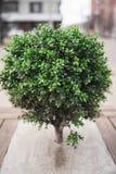 Mała drzewna krzaka vertical rama Obraz Royalty Free