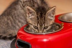 Mała dziecko kota woda pitna Zdjęcia Stock