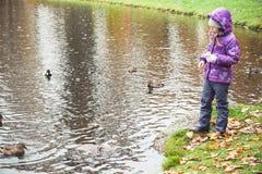 Mała dziewczynka karmi kaczki na jeziorze w parku Obraz Royalty Free