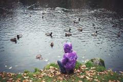 Mała dziewczynka karmi kaczki na jeziorze w parku Fotografia Stock