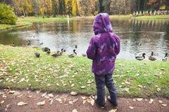 Mała dziewczynka karmi kaczki w parku Zdjęcia Stock