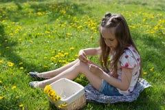 Mała dziewczynka na dandelion gazonie podnosi up dandelions w koszu Zdjęcie Royalty Free