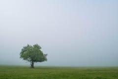 małe drzewko Zdjęcia Stock
